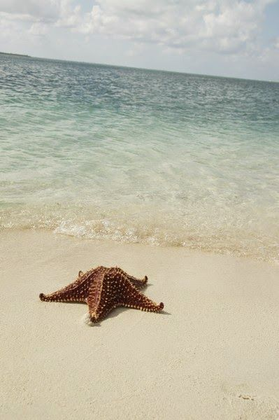 coquillage étoile de mer solitaire