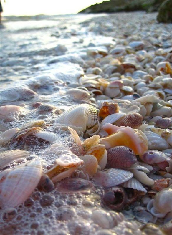 coquillage galets mélange rejeté par les marées