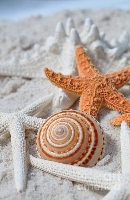 coquillage mélange sur le sable abandonnés