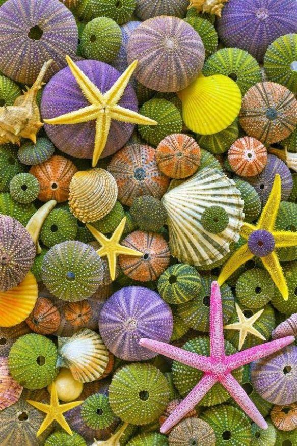 coquillage oursins étoiles et couleurs