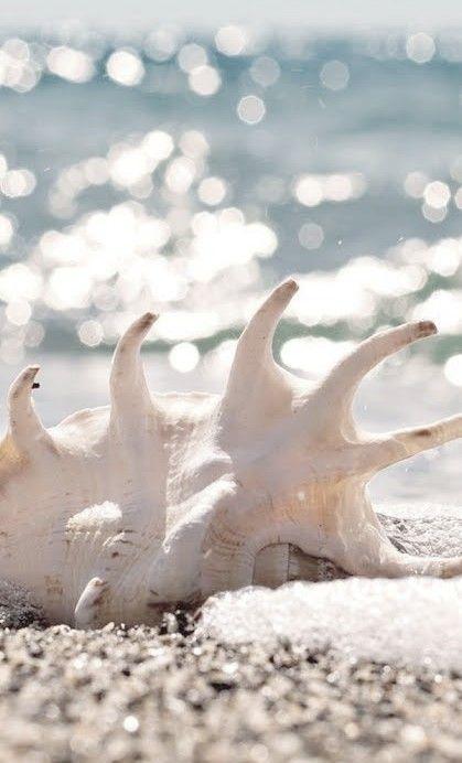 coquillage sur la plage lylouanne
