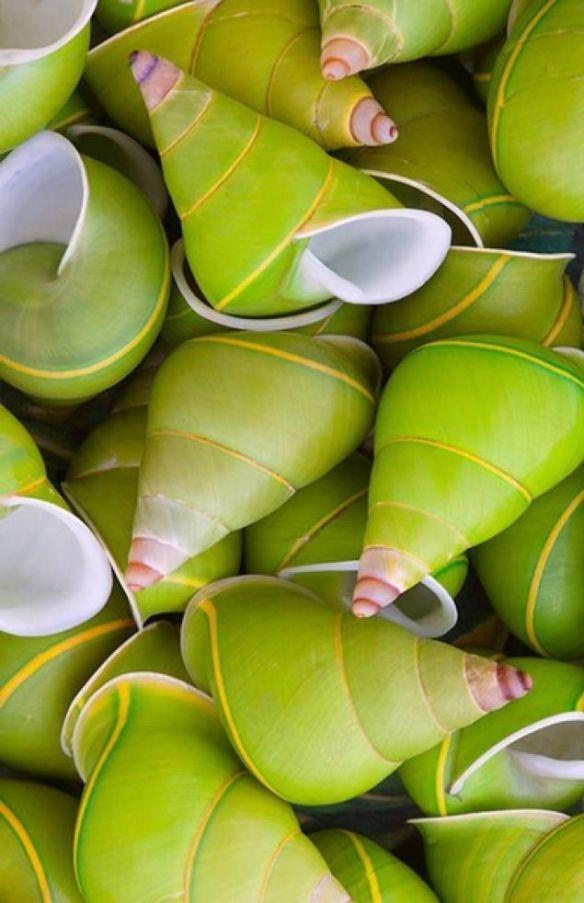 coquillages verts étrange effet ou réalité