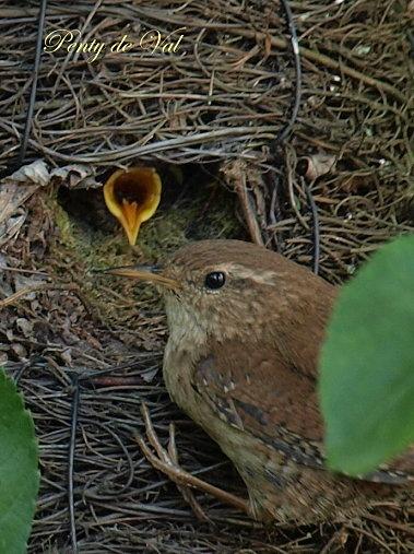 a oiseau au nid