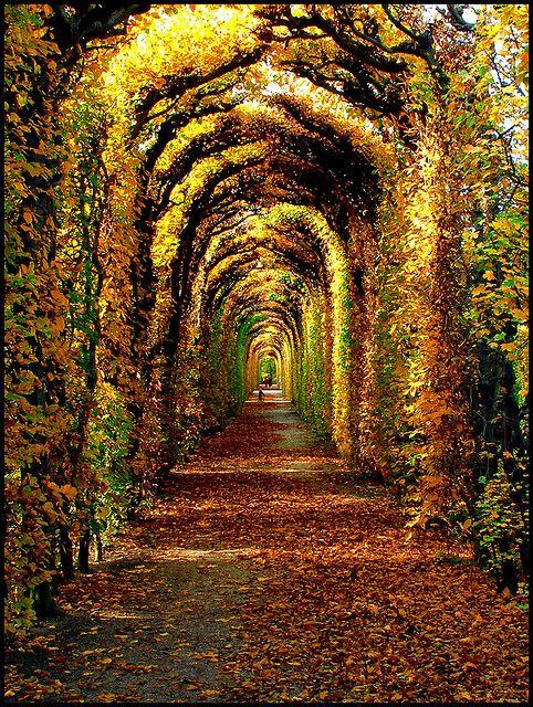 arrière saison automne à Schönbrunn sur Pinterest