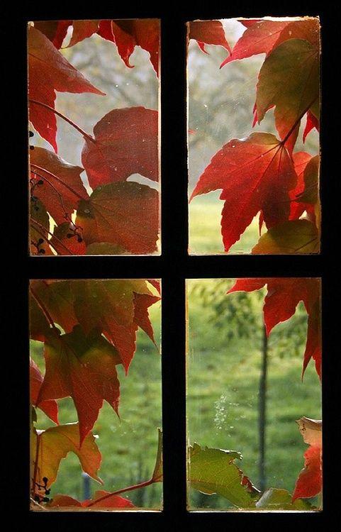 automne fen^tre