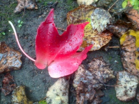 automne feuille vigne a terre