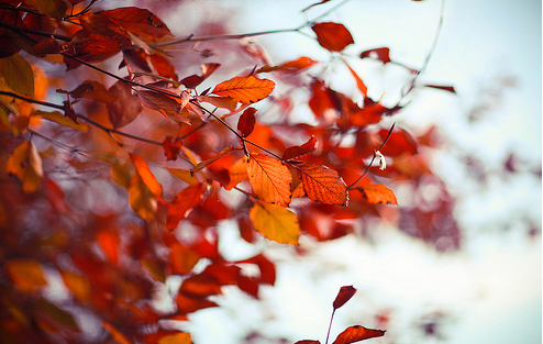 automne pour somaja vanishingintoclouds