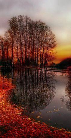 automne rose et or pour matin d'octobre