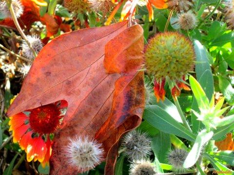 feuille morte sur fleurs