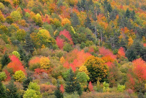 Que la montagne est belle en automne !