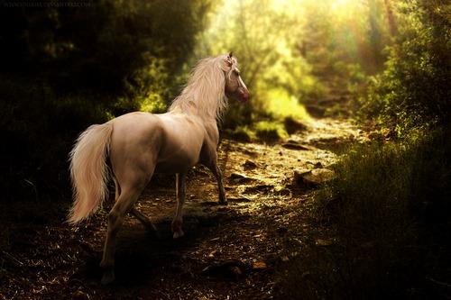 cheval blanc e-p-o-q-u-e tumblr
