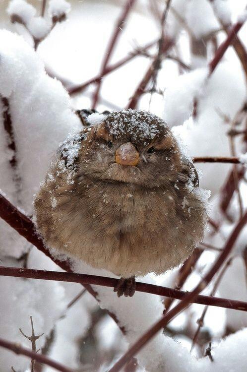 oiseau sous la neige vanishingintoclouds