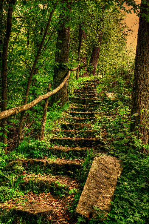 escalier sauvage vers l'inconnu naturespiritheart tumb