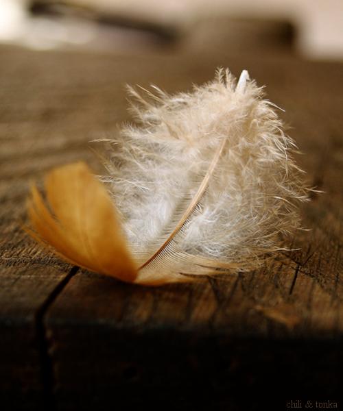 plume oiseau vanishingintoclouds
