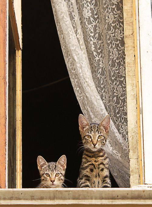 Plumes chats à la fenêtre ou quand je dis à mon assistant de tenir la boutique, trac !