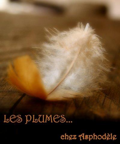 Les plumes - 21 novembre 2015
