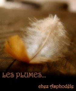 Logo Plumes aspho 4 ème tiré du tumblr vanishingintoclouds
