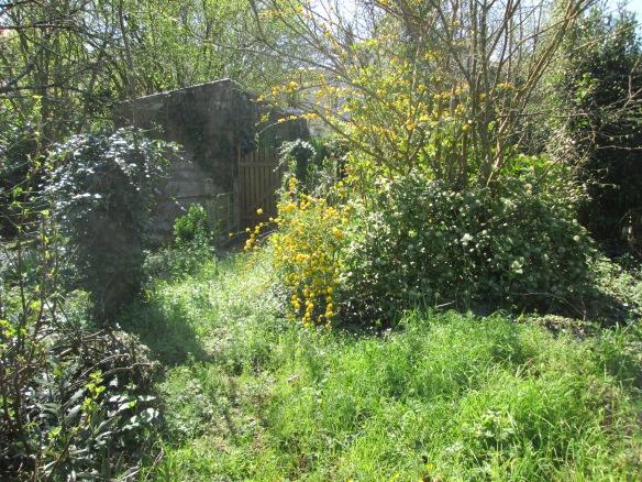 """Là, c'est """"désolaçion"""" ! Le chemin des """"filles d'à côté"""" (elles ne vivent plus ici), abandonné et retour à la luxuriance de la végétation...."""