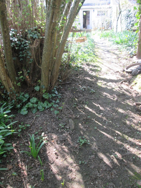 Je suis passée sur le petit pont qui sépare les deux jardins et je remonte l'allée, parfois je m'appuie au gros noisetier plus que centenaire, sur la gauche... la promenade est finie !