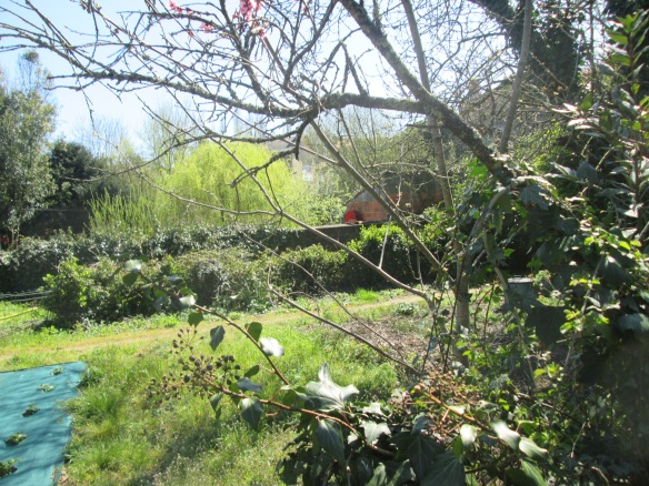 On est dans un ancien jardin potager semi abandonné, pruniers, cerisiers, pêchers, noyers...qui donnent en fonction des années, on ne traite pas !