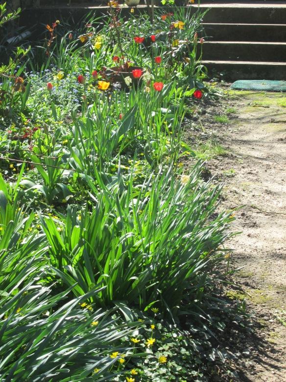 """Il faut descendre les quatre marches et c'est parti, ici c'est le """"petit"""" jardin (d'agrément comme dirait ma mère)..."""