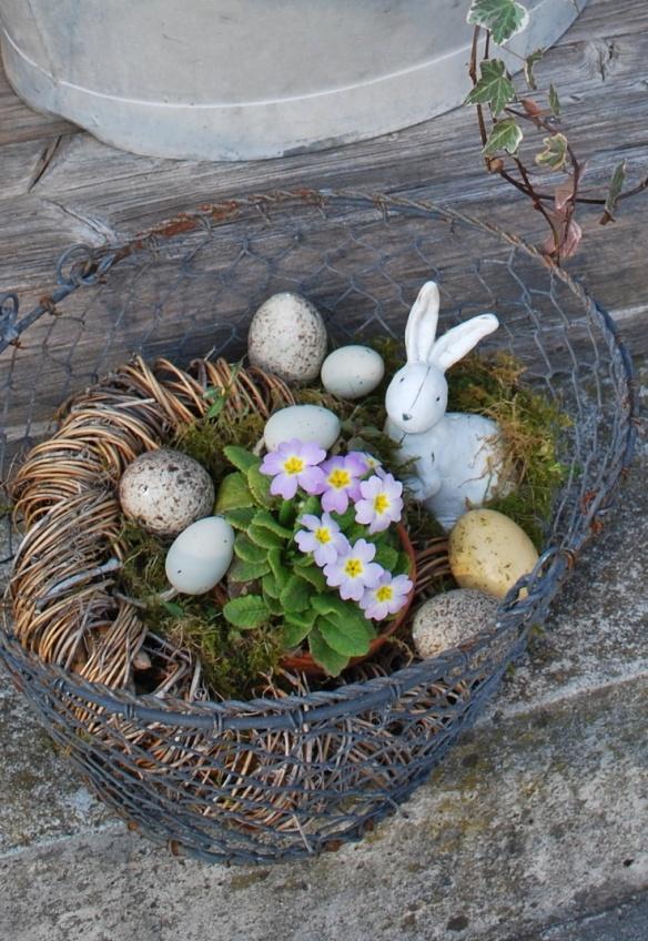 pâques nid oeuf lapin primevères ana-rosa