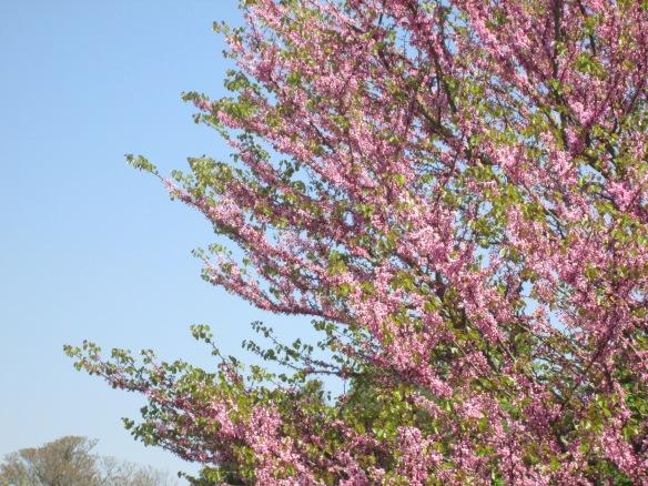 Avant-hier quand on croyait que le printemps allait durer...