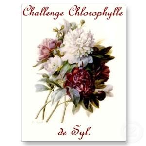 logo Syl challenge chlorophylle