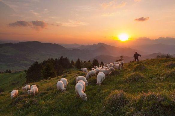 a pastori transhumance coucher de soleil