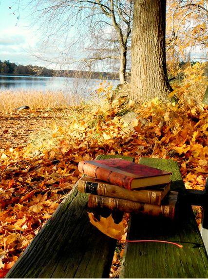 automne banc et livres