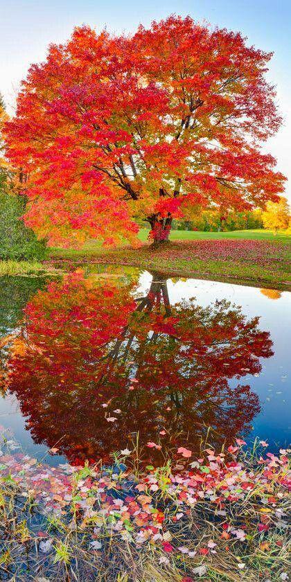 automne débauche de couleurs et reflets