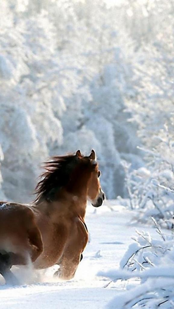 cheval dans la neige pinterest
