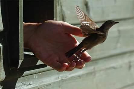 envol oiseau main qui lâche