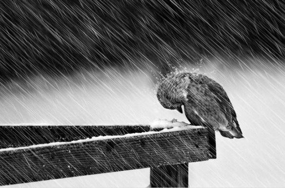 a cabral oiseau