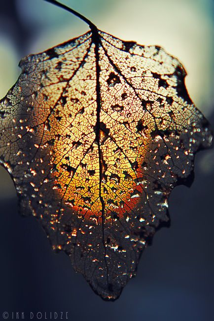 a cadou chute avec mon âme comme une eau tranquille