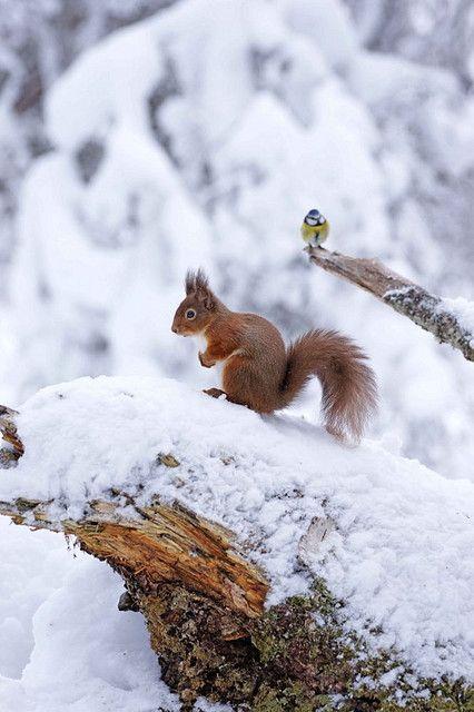 a-lili-une-bonne-annee-mon-necureuil