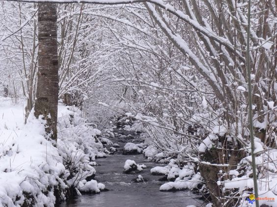 a poésie ruisseau hiver