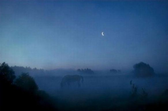 cheval dans la brume sur xaxor com