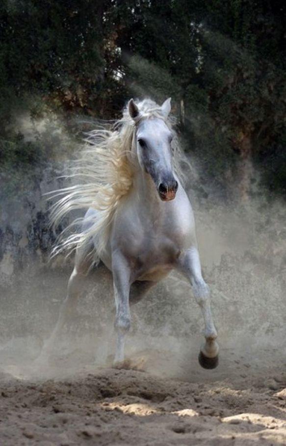 cheval blanc au galop dans un nuage d'écume sur xaxor com