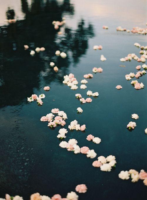 a fleurs sur l'eau