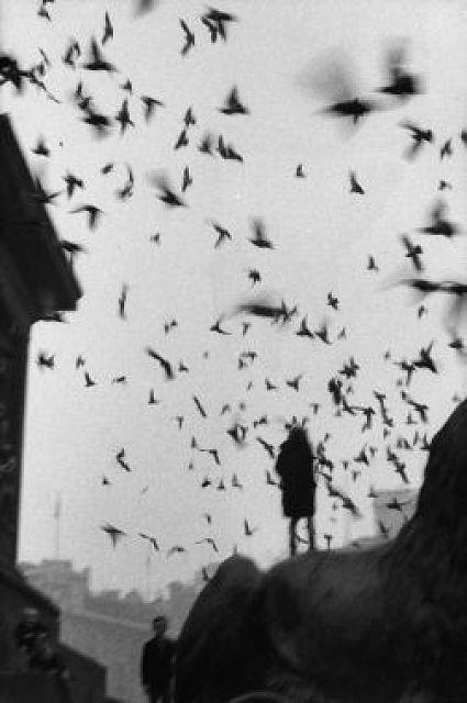 femme-oiseaux-melancolie