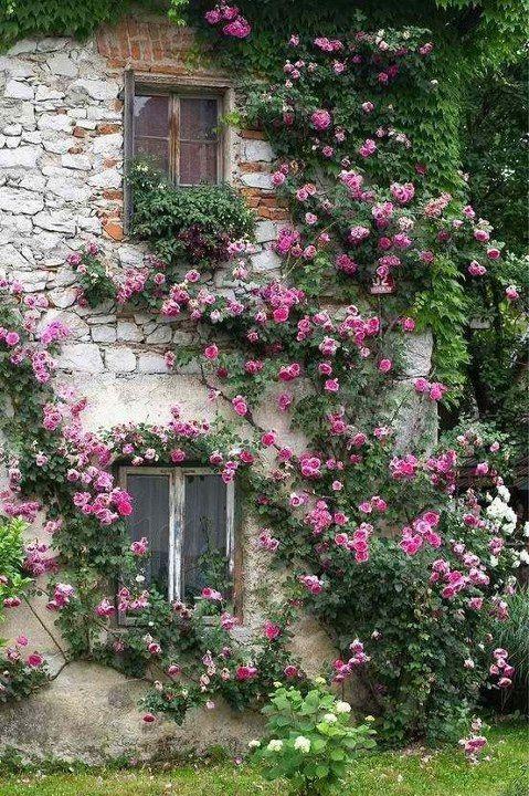 a-nerval-roses-et-vigne-vierge