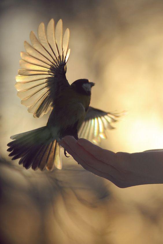 a-vivien-envol-oiseau